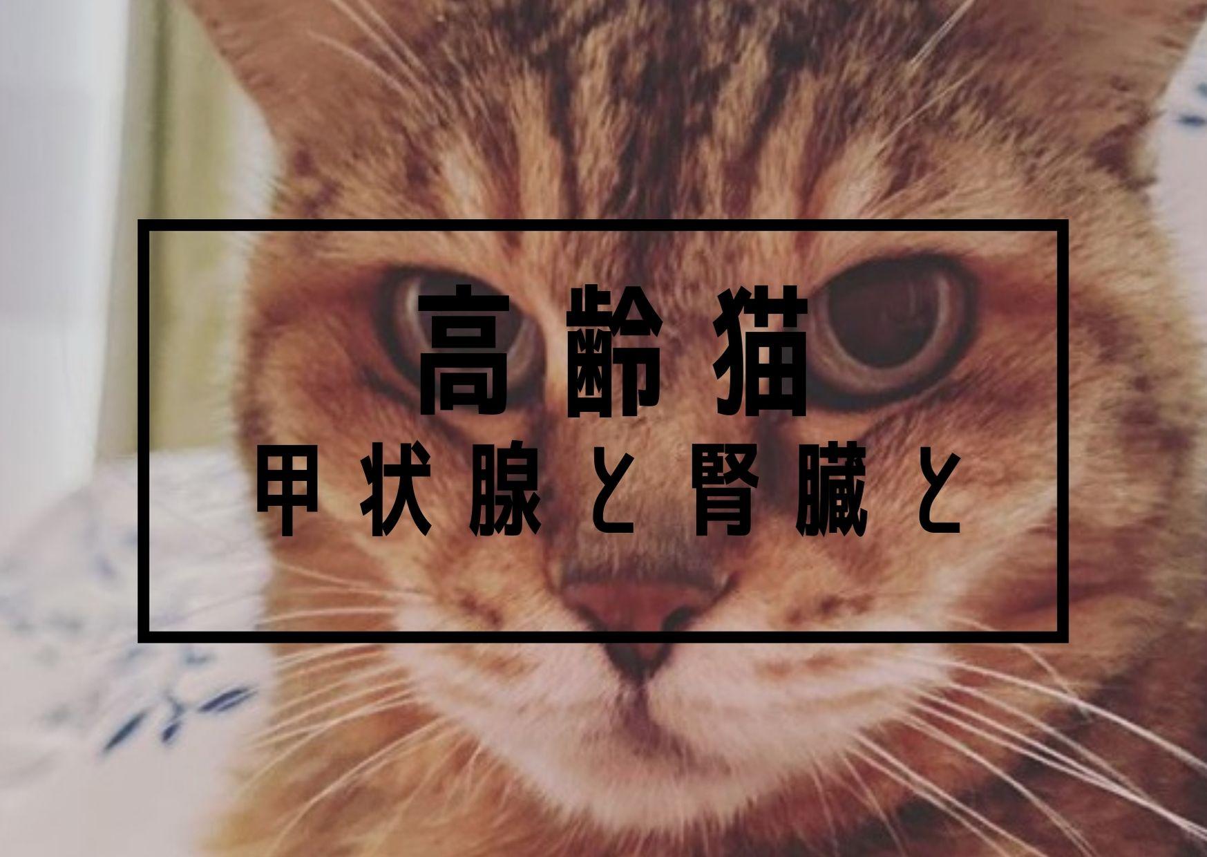 機能 亢進 甲状腺 症 猫